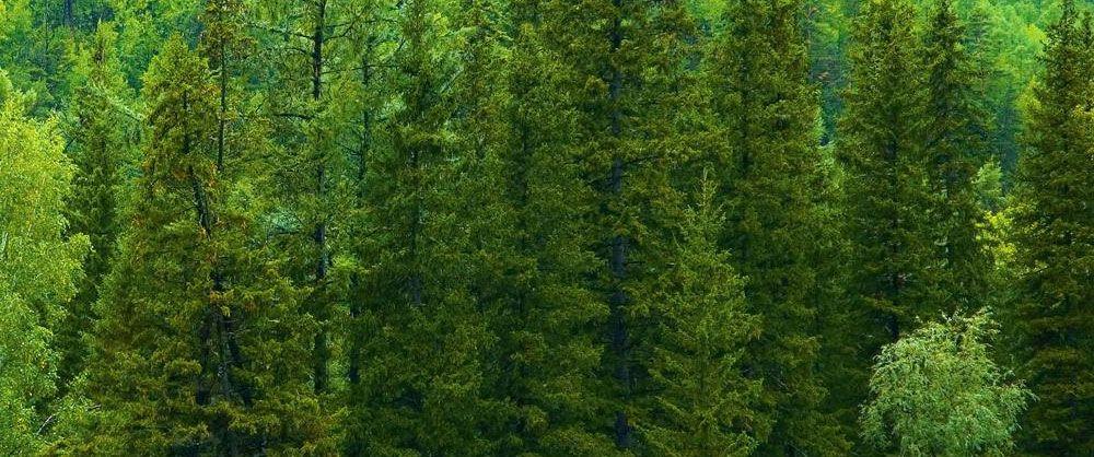 Оптово розничная база пиломатериалов северный лес